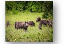 Государственное лесное-охотничее хозяйство «КАЛГАНСИР»