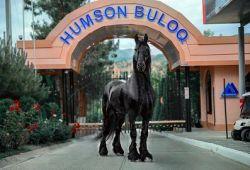 Санаторно-курортный комплекс HUMSON BULOQ